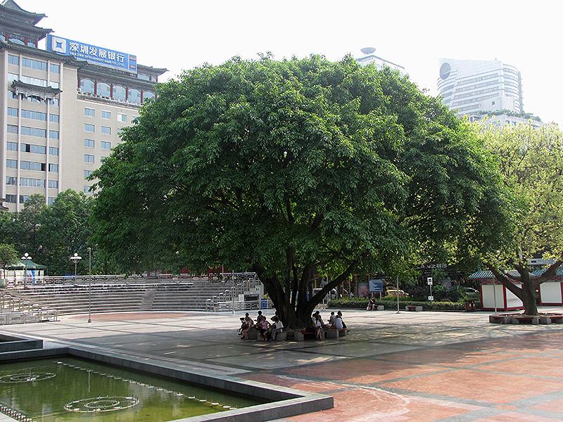 Ficus Garden Garden Ftempo